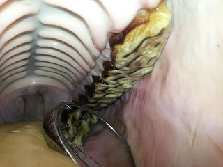 Tierarzt Praxis Dr. Volz - Zahnbehandlung Spiegel